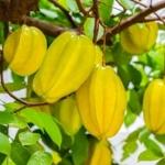 กลิ่น Star fruit (มะเฟือง) MP/HP