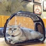 กระเป๋าสะพายสำหรับใส่สัตว์เลี้ยงเวลาเดินทางแบบโปร่งใส