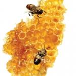 กลิ่น Honey (น้ำผึ้ง)