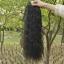 hair piece ทนความร้อนเกาหลี (สีดำ) thumbnail 2