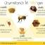 ครีมพิษผึ้ง lamala bee venom อ่อนเยาว์ ลดริ้วรอยโดยไม่ต้องการศัลยกรรม thumbnail 3