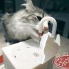 MU0026 น้ำก๊อกแมว ถาดก๊อกน้ำแมว น้ำพุแมว CattyMan เพื่อสุขภาพแมว นำเข้าจากญี่ปุ่น สินค้าพร้อมส่ง