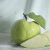 ฝรั่งผลไม้มีประโยชน์แต่ คนท้องไม่ควรกิน มาก