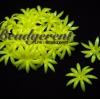 ดอกพิกุลพลาสติก 35มม. สีเหลือง (10 กรัม)