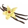 กลิ่น Floral vanila 1kg.Food Grade ลง Lip ได้