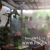 หัว 0.3 mm เพิ่มความชุ่มชื้นให้สวนสวย ๆ ในบ้านคุณได้ง่ายๆ ขอบคุณรีวิว จากลูกค้า