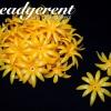 ดอกพิกุลพลาสติก 35มม. สีเหลืองแก่ (10 กรัม)