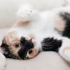 เลี้ยงแมวในบ้าน คุณแม่ ตั้งครรภ์ ต้องระวัง
