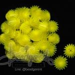 ดอกบานไม่รู้โรย พลาสติก 13*15มม. สีเหลือง (10 กรัม)