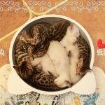 ที่นอนกะทะเย็นๆ รูปแมวสำหรับสัตว์เลี้ยงหน้าร้อน ผลิตจากอลูมิเนียมเย็น