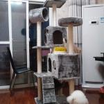 MU0084 คอนโดแมวเจ็ดชั้น ต้นไม้แมว มีบ้านอุโมงค์สองชั้น บันได สูง 160 cm