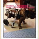 รถเข็นสำหรับสัตว์พิการ วีลแชร์หมา วีลแชร์แมว วีลแชร์สำหรับสัตว์เลี้ยงอายุมาก สำหรับน้ำหนัก 9-16 KG แบบ 4 ล้อ