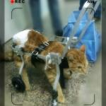 รถเข็นสำหรับสัตว์พิการ วีลแชร์หมา วีลแชร์แมว วีลแชร์สำหรับสัตว์เลี้ยงอายุมาก สำหรับน้ำหนัก 2-4KG แบบ 4 ล้อ
