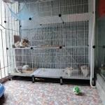 กรงแมวขนาดใหญ่ 3 ชั้น มีบันได 2 ข้าง 140X48X152 cm