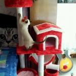 MU0059 คอนโดแมวสามชั้น ต้นไม้แมว มีบ้านอุโมงค์ กระบะนอน เปลนอน ของเล่นแขวน สูง 135 cm