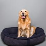 ที่นอนสำหรับสุนัขพันธุ์ใหญ่ ไม่เกิน 70 ปอนด์