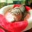 MU0055 คอนโดแมวสามชั้น ต้นไม้แมว มีบ้านอุโมงค์ เปล ของเล่นแขวน สูง 105 cm thumbnail 13