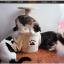 คอนโดแมว เป็นที่นอนและที่ลับเล็บและมีอุโมงค์ทางเข้าออก ปีนออกกำลังกายได้ thumbnail 1