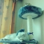 MU0053 คอนโดแมวหกชั้น ต้นไม้แมว มีเปล อุโมงค์ กล่องบ้านไว้สลับกันแต่ละชั้น สูง 160 cm thumbnail 5