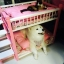 เตียงนอนไม้สำหรับหมาแมว มีหลายขนาด แบบ 2 ชั้น มีบันไดขึ้นลงด้านข้าง รุ่นยอดนิยม thumbnail 9