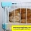 กรงแมว style Condo มีหลายชั้น บ้านแมว กรงสัตว์เลี้ยง เป็นทั้งบ้านที่นอน ห้องอาหาร ห้องน้ำสำหรับสัตว์เลี้ยง ประกอบง่าย สูง51cm - 158 cm พับเก็บได้ มีล้อ thumbnail 11