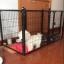 กรงรั้วสำหรับสุนัขและกระต่ายเลี้ยงในร่ม มีหลายสี หลายไซส์ thumbnail 12