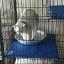 ที่นอนกะทะเย็นๆ รูปแมวสำหรับสัตว์เลี้ยงหน้าร้อน ผลิตจากอลูมิเนียมเย็น thumbnail 11