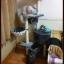 MU0053 คอนโดแมวหกชั้น ต้นไม้แมว มีเปล อุโมงค์ กล่องบ้านไว้สลับกันแต่ละชั้น สูง 160 cm thumbnail 11