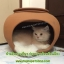 บ้านดินเผาสัตว์เลี้ยงช่วยคลายร้อน บ้านแมว กระต่าย สุนัข หนู ช่วยป้องกันภาวะโรคลมแดดหรือฮีทสโตรกเสียชีวิตได้ค่ะ thumbnail 1
