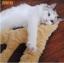 MU0017 เบาะนอนแมว Tada กำมะหยี่ น่ารักรูปร่างรอยเท้าการ์ตูน หนานุ่ม thumbnail 1