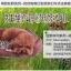MU0129 ที่นอน เบาะนอนสำหรับสัตว์เลี้ยง เบาะนอนหมา แมว ตัวเบาะและเนื้อผ้านุ่มสบาย น่าสัมผัส ขนาด 55 x 45 cm : 4.2 kg. thumbnail 3