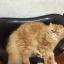 โซฟาจำลองสัตว์เลี้ยง โซฟาสุนัข โซฟาแมว thumbnail 2