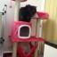 MU0055 คอนโดแมวสามชั้น ต้นไม้แมว มีบ้านอุโมงค์ เปล ของเล่นแขวน สูง 105 cm thumbnail 5