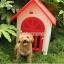บ้านสุนัข บ้านแมวพลาสติ วัสดุแข็งแรงทนทาน ระบายอากาศได้ดี thumbnail 1