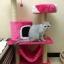 MU0055 คอนโดแมวสามชั้น ต้นไม้แมว มีบ้านอุโมงค์ เปล ของเล่นแขวน สูง 105 cm thumbnail 15