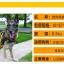 รถเข็นวีลแชร์สำหรับสัตว์เลี้ยง รุ่น xL : สำหรับสุนัขขนาดใหญ่ที่มีน้ำหนักเกินกว่า 45 กก. thumbnail 2