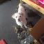รถเข็นสำหรับสัตว์พิการ วีลแชร์หมา วีลแชร์แมว วีลแชร์สำหรับสัตว์เลี้ยงอายุมาก ขนาดเล็ก 2-4Kg 4-9Kg แบบ 2 ล้อ สำหรับขาหลัง thumbnail 19