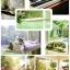 คิตตี้เตียงแมวเปลญวน ติดข้างฝา ติดกระจก ให้แมวน้อยชมวิว thumbnail 6