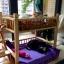 เตียงนอนไม้สำหรับหมาแมว มีหลายขนาด แบบ 2 ชั้น มีบันไดขึ้นลงด้านข้าง รุ่นยอดนิยม thumbnail 5