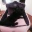 เตียงนอนสัตว์เลี้ยง ที่นอนหมาแมว นอนสบายไม่ร้อน ฐานเตียงมีปุ่มกันลื่น thumbnail 8
