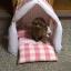 ชุดที่นอนสัตว์เลี้ยงพันธุ์เล็กและกลาง มีม่านบังเป็นส่วนตัว thumbnail 15