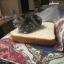 ที่นอนขนมปัง Sandwich Mat For Cat - Dog thumbnail 4