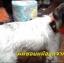 Mini Pet GPS Tracker อุปกรณ์ติดตามป้องกันสัตว์เลี้ยงหาย มีแบตในตัว กันน้ำ thumbnail 16