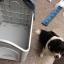 บ้านพลาสติกสัตว์เลี้ยง หมาแมว ตั้งไว้กลางแจ้งได้ ระบายอากาศปลอดโปร่ง thumbnail 19