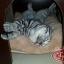 MU0022 เตียงนอนแมว ที่นอนแมว ห้องนอนแมว นำเข้าจากญี่ปุ่น thumbnail 5