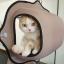 เปลญวณแมว ติดผังกระจกสำหรับชมวิว แข็งแรงทนทาน thumbnail 6