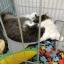 ที่นอนกะทะเย็นๆ รูปแมวสำหรับสัตว์เลี้ยงหน้าร้อน ผลิตจากอลูมิเนียมเย็น thumbnail 9