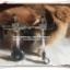 รถเข็นสำหรับสัตว์พิการ วีลแชร์หมา วีลแชร์แมว วีลแชร์สำหรับสัตว์เลี้ยงอายุมาก ขนาดเล็ก สำหรับน้ำหนัก 2-4 KG แบบ 4 ล้อ thumbnail 2