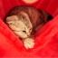 MU0055 คอนโดแมวสามชั้น ต้นไม้แมว มีบ้านอุโมงค์ เปล ของเล่นแขวน สูง 105 cm thumbnail 17