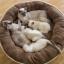 ที่นอนหมาแมวทรงกลมขนาดใหญ่ สีน้ำตาลอ่อน สีน้ำตาลเข้ม thumbnail 3